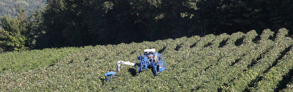 harvester in vineyard