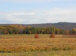 stever hill vineyards fall foliage