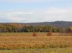 stever hill vineyards fall foliage
