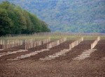 stever hill vineyards grape planting