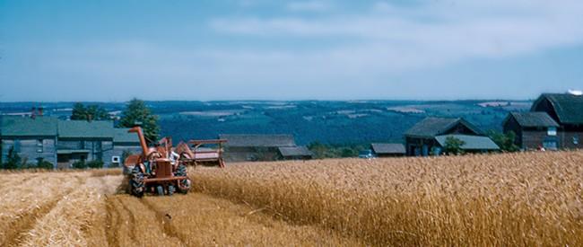 stever hill vineyards historical farming