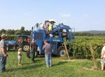 stever hill vineyards picking crew