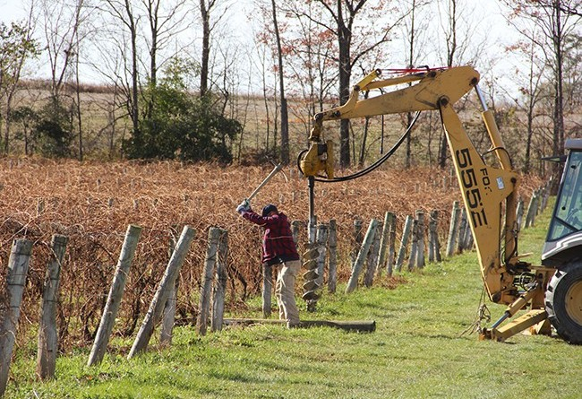 stever hill vineyards setting posts