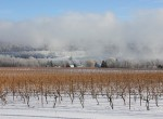 stever hill vineyards winter storm