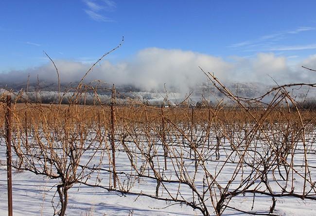stever hill vineyards winter storm
